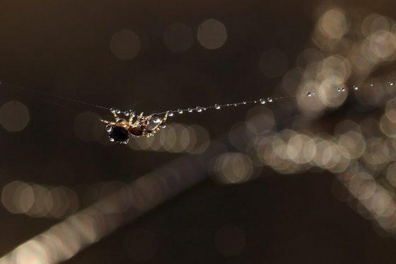 Die Spinnen - Sie inspirierten Forscher zur Entwicklung eines Sprachdetektors-1